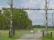 The Cattle Gate