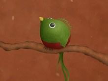 A Little Quetzal