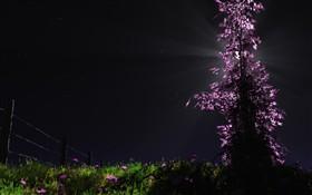 Silent Night X