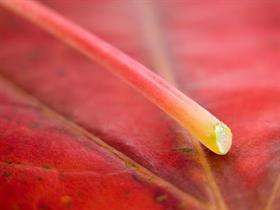 Vista Leaf 1