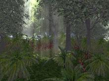 Rain Forest 1024x768