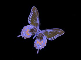 Blacklight Butterfly 04