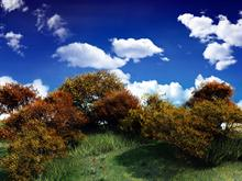 Woodland Hill