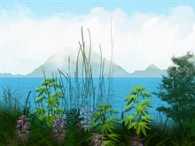 Tender Paradise Island