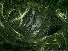 Rotten Algae