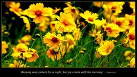 Joy Comes!