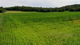 Grimstad Grassfield 1