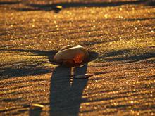 Sunset Seashell