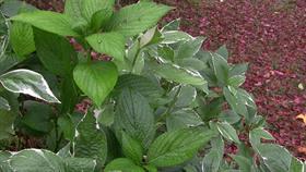 Fluttering Leaves
