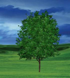 Animated Tree