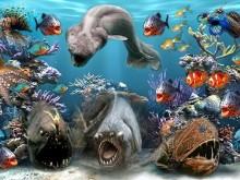 Sea Creature Bad Boys