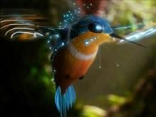 3D Humming Bird