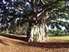 Autumn in Hawaii by: AzDude