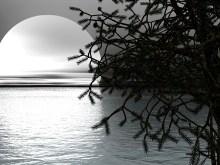 Moonlight Bay II