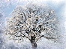 Ice Willow 2  Logon