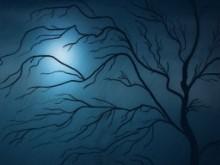 Blisfull night dream