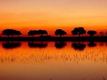 Sunset-horizon WS