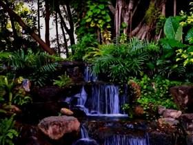 lush garden waterfall