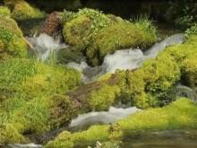 mossy spring creek