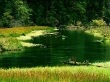 the green stream