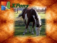 XPony