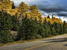 Colorado Autumn Road