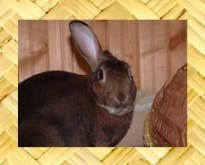 House Rabbits at Home